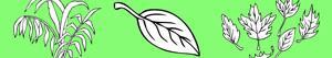 kolorowanki Rośliny i Liście